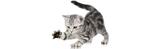 Haaksbarf Catfood Vis_