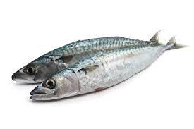 Sardine 1 kilo