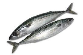 Makreel, bulk +/-10 kilo