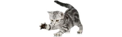Bandit Bio Vleesmix 300 gram, kat